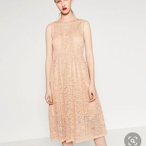 Zara Guipure blush lace midi dress